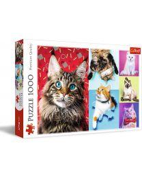 Happy Cats, 1000 Piece Puzzle